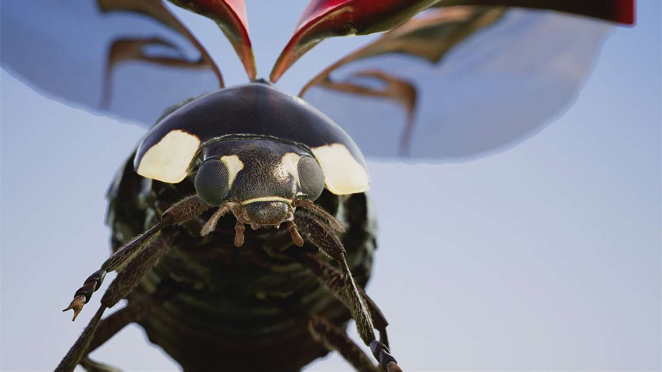 Insects Hero image
