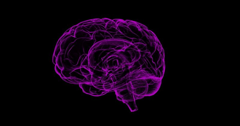 A stylised representation of the human brain